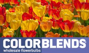 colorblendslogo