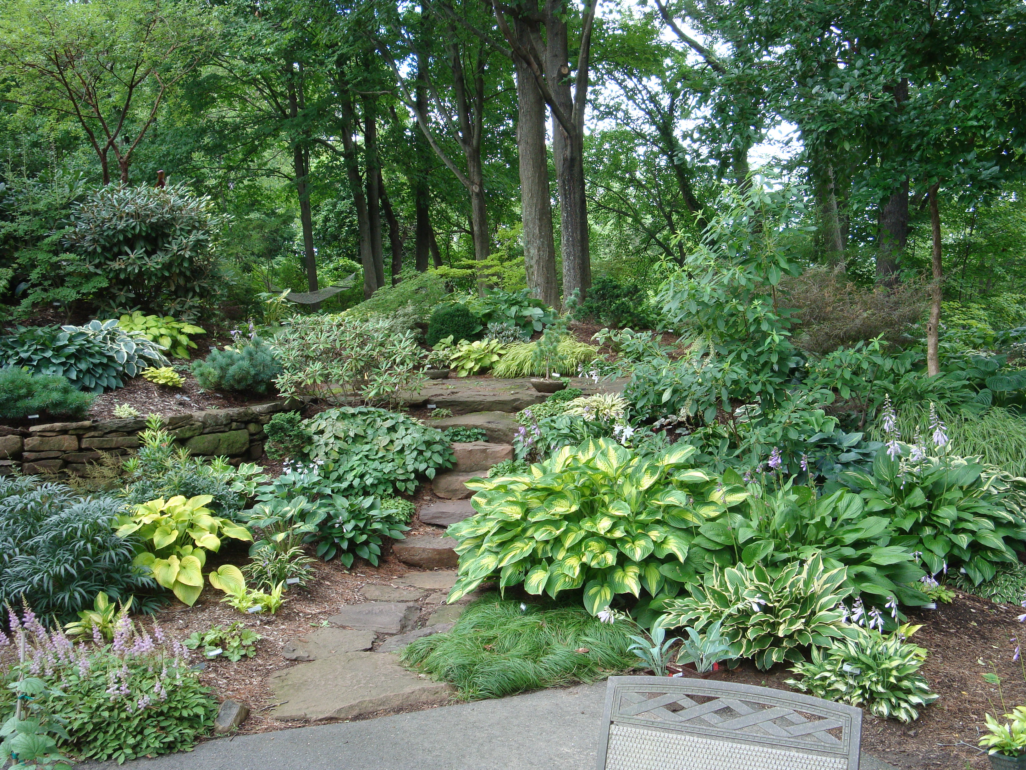 Landscaping Trees For Shade : Shade garden